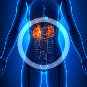 Rates of Chronic Kidney Disease in US Steady for More Than a Decade
