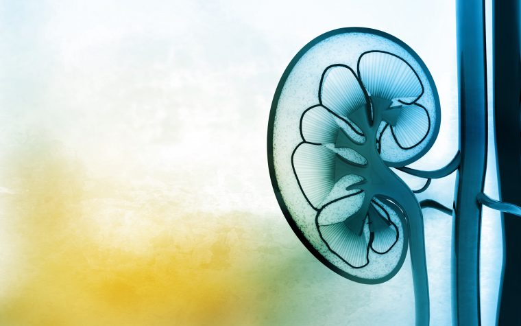 Higher Serum Levels of Klotho Protein May Protect Kidney Function, Study Finds